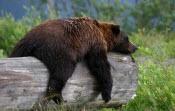 110529 Bears Sleeping