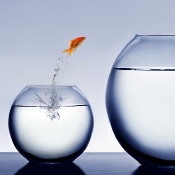 Goldfish jumping to new bowl