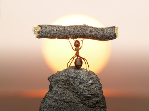 Ants-are-incredibly-strong